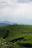 Two loving horses in wonderful scenery in mountains of irati, basque country, france Royalty Free Stock Photo