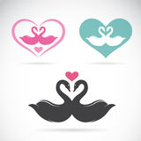Two loving swans Royalty Free Stock Image
