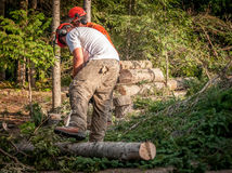 Two lumberjacks cutting trees royalty free stock photo