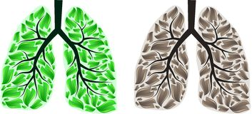 Two lungs Stock Photography