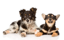 Two lying puppy looking at camera.  on white background Stock Images