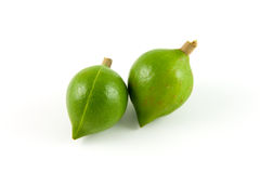 Two macadamias Royalty Free Stock Image