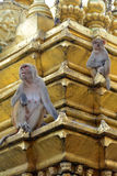 Two macaques on top of chorten in Swayambhunath, Nepal Stock Images