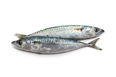 Two mackerel Royalty Free Stock Images