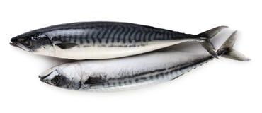 Two mackerel fishes Royalty Free Stock Photos