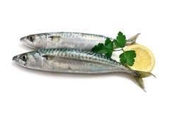 Two mackerel with lemon Stock Photo