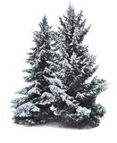 Two magnificent snow-covered fir-trees isolated on white Stock Photos