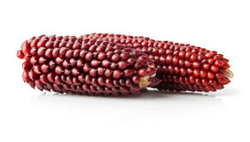 Two Maize Corncobs Royalty Free Stock Photo