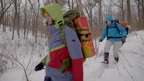 Two male and two female hikers are strolling in winter forest in daytime, helping to themselves by sticks. Extreme sport activities stock video footage
