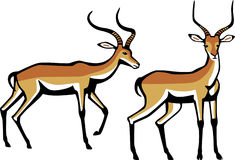 Two Male Impala. Illustration two male impala antelope Royalty Free Stock Images