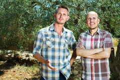 Two male in olive tree garden Royalty Free Stock Image