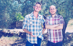 Two male in olive tree garden Royalty Free Stock Images