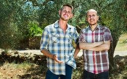 Two male in olive tree garden Royalty Free Stock Photos