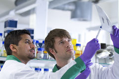 Two male students studying data sheet. Two male students of different nationality study a data sheet in biotech laboratory. They wear purple gloves and hold up a Royalty Free Stock Image