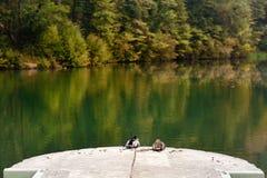 Two mallard ducks near lake - calm scene. Two mallard ducks near lake - calm relax scene Stock Images