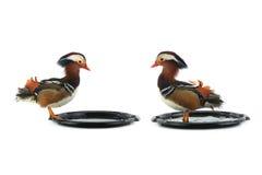 Two mandarin ducks male Royalty Free Stock Photography