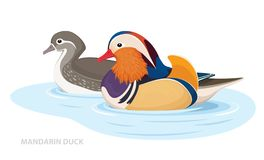 Two Mandarin Ducks Swim In The Water. Asian Birds. Male And Female. Vector Royalty Free Stock Photos