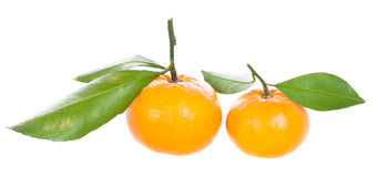 Two mandarins with green leaves Royalty Free Stock Photo