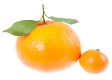 Two mandarins with green leaves. big aand small. Stock Photo
