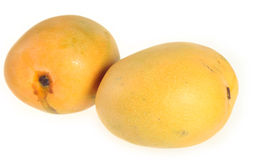 Two mangoes Royalty Free Stock Photos