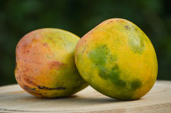 Two mangoes (biological). Two biological mangoes presented on a plate Royalty Free Stock Photos