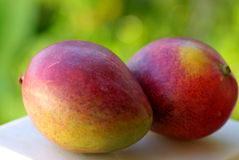 Two mangoes fruits Stock Photo
