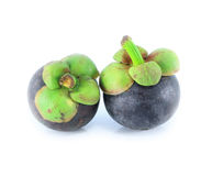 Two mangosteens Stock Images