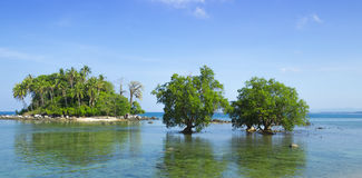 Two mangrove in the area of low tide Stock Image