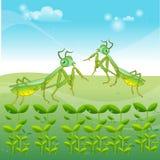 Two mantis animal Stock Photography