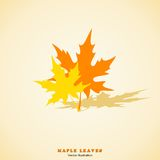 Two Maple Leaves. Vector Illustration. Two Maple Leaves. Vector Illustration Royalty Free Stock Images