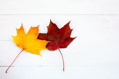 Two maple leaves on white wooden background Stock Photos