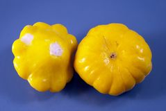 Two marinated pattypans Stock Photography