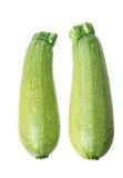 Two marrow zucchini Royalty Free Stock Photography