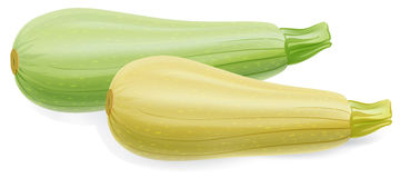 Two marrow zucchini. On  white background Royalty Free Stock Image