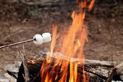Two Marshmallows on a stick over a bonfire Stock Images