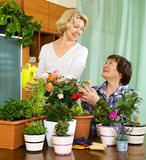 Two mature housewifes taking care of decorative plants. In pots Royalty Free Stock Image