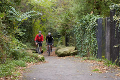 Two Mature Male Cyclists Riding Bikes Along Path. Two Mature Male Cyclists Riding Bikes Along A Tree lined Path Stock Images