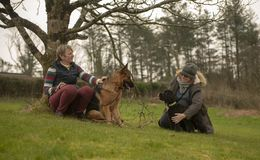 Two mature woman with dogs relaxing outdoors. Two mature women with dogs relaxing outdoors in winter stock photo