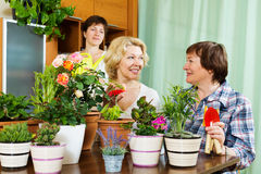 Two mature women and girl taking care of  plants. Two mature women and girl taking care of domestic plants in pots Royalty Free Stock Images