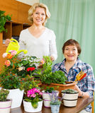 Two mature women taking care of domestic plants. In pots Royalty Free Stock Photos