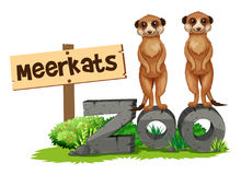 Two meerkats by the zoo sign. Illustration Stock Photography