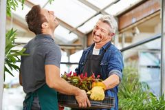 Two men as florists in gardening. Two men as florists work together in a nursery royalty free stock photography