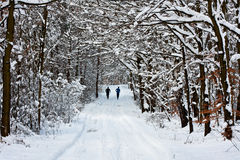 Winter Jogging Stock Photos