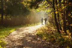 Two men are busy with nordic walking in the morning in the park, sunbeams and fog, a path that goes into the distance Royalty Free Stock Photos