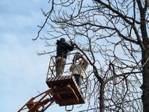 Two men in casual clothes saw-off branches of a chestnut with chainsaw, standing on an aerial work platform. Spring and autumn. Work on the care of tall trees royalty free stock photo