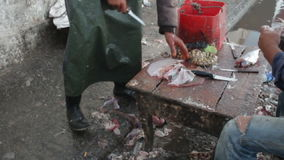Two men cleaning and descaling fresh caught fish, one is cleaning a filet and hosing off table, other is scraping scales stock footage