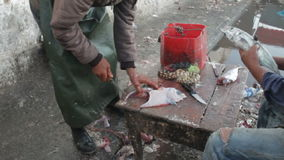 Two men cleaning and descaling fresh caught fish, one is cleaning a filet and hosing off table, other is scraping scales stock video