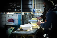 Two men cleaning fresh fish at the market. Fresh fish at the market in italy Royalty Free Stock Photos