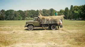 Two men collecting hay on truck, working on straw field, countryside.  stock video footage