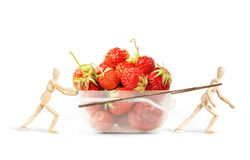 Two men drag a plastic box with ripe strawberries Royalty Free Stock Image